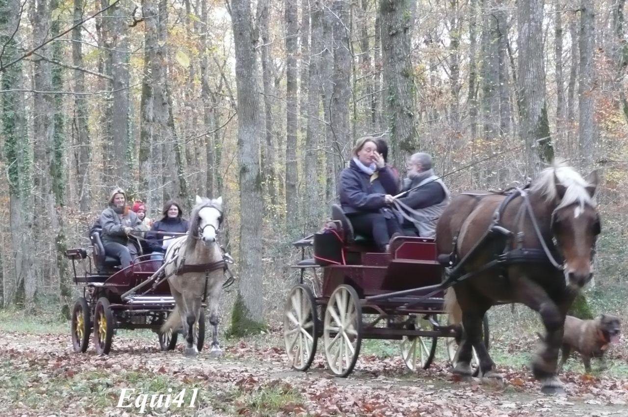 A plusieurs attelages en forêt de Blois