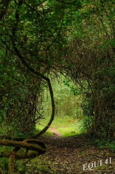 Mystère, très loin dans la forêt