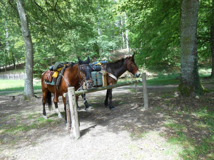 Randonnée avec une mule batée