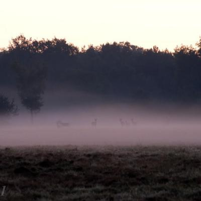 Brume au levée du jour